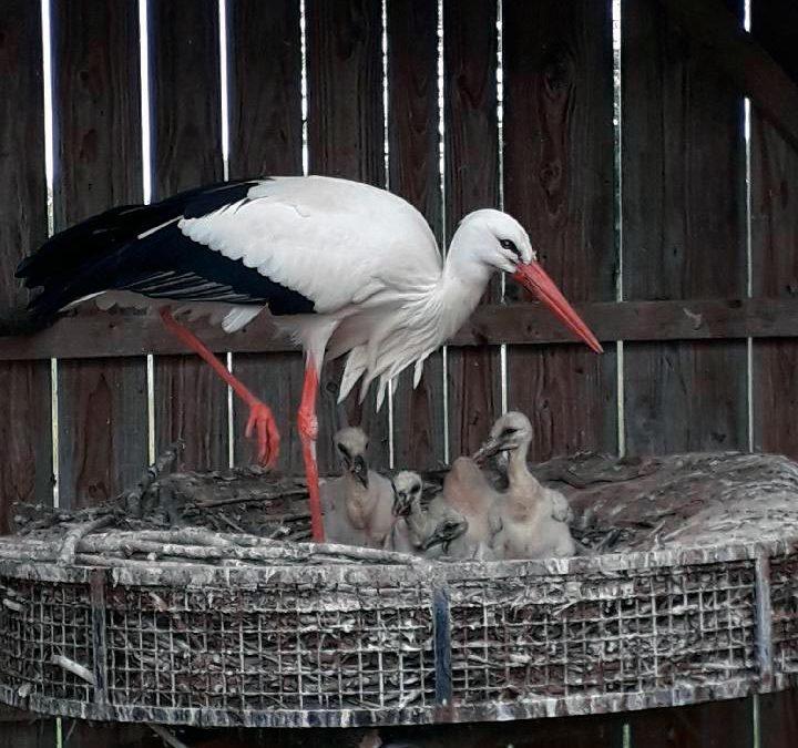 Les premières naissances!